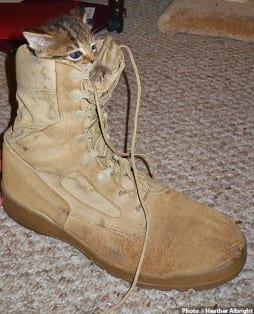 Photo of kitten in soldier's boot by Heather Albright