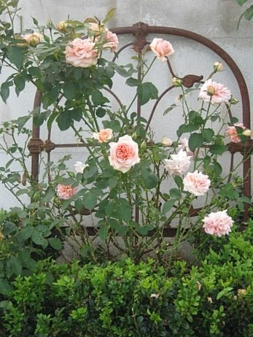 6 diy repurposed trellis ideas the humble gardener for Using recycled materials in the garden