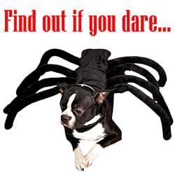 SpiderDog_63023