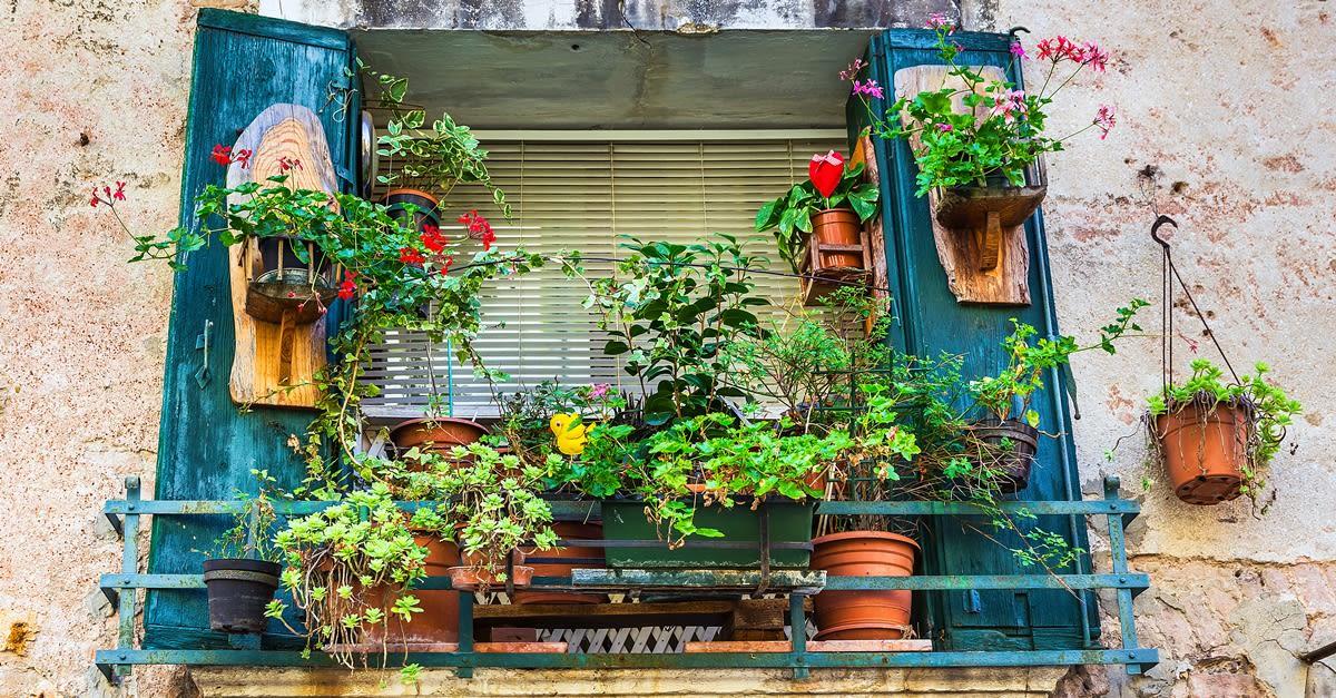 Apartment-gardening1