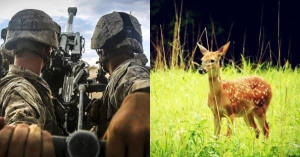 Bambi-Marine22