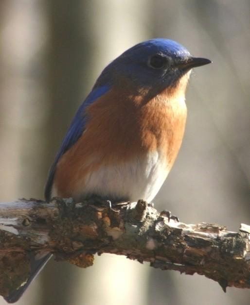 bluebird2_1