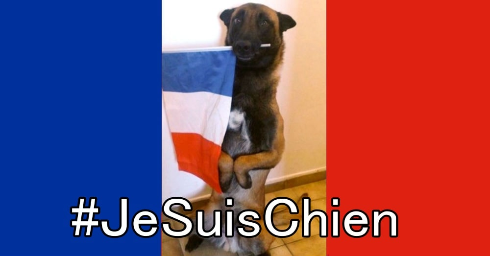 Support has taken to twitter with #JeSuisChien / Via M@NU