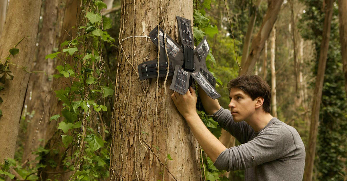 Topher White installing his anti-tree poaching device