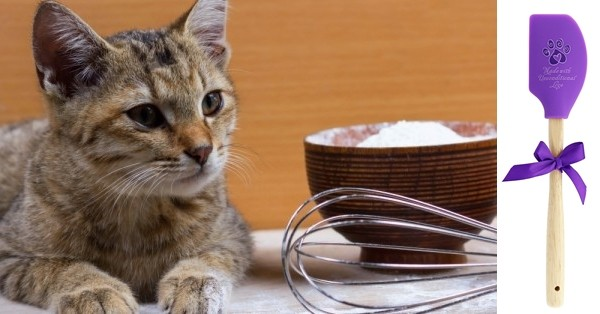 cat-baking_1000x523-600x314-horz