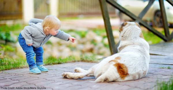 Toddler playing with big dog