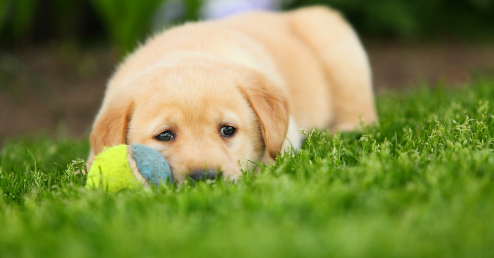 Puppy with ball.