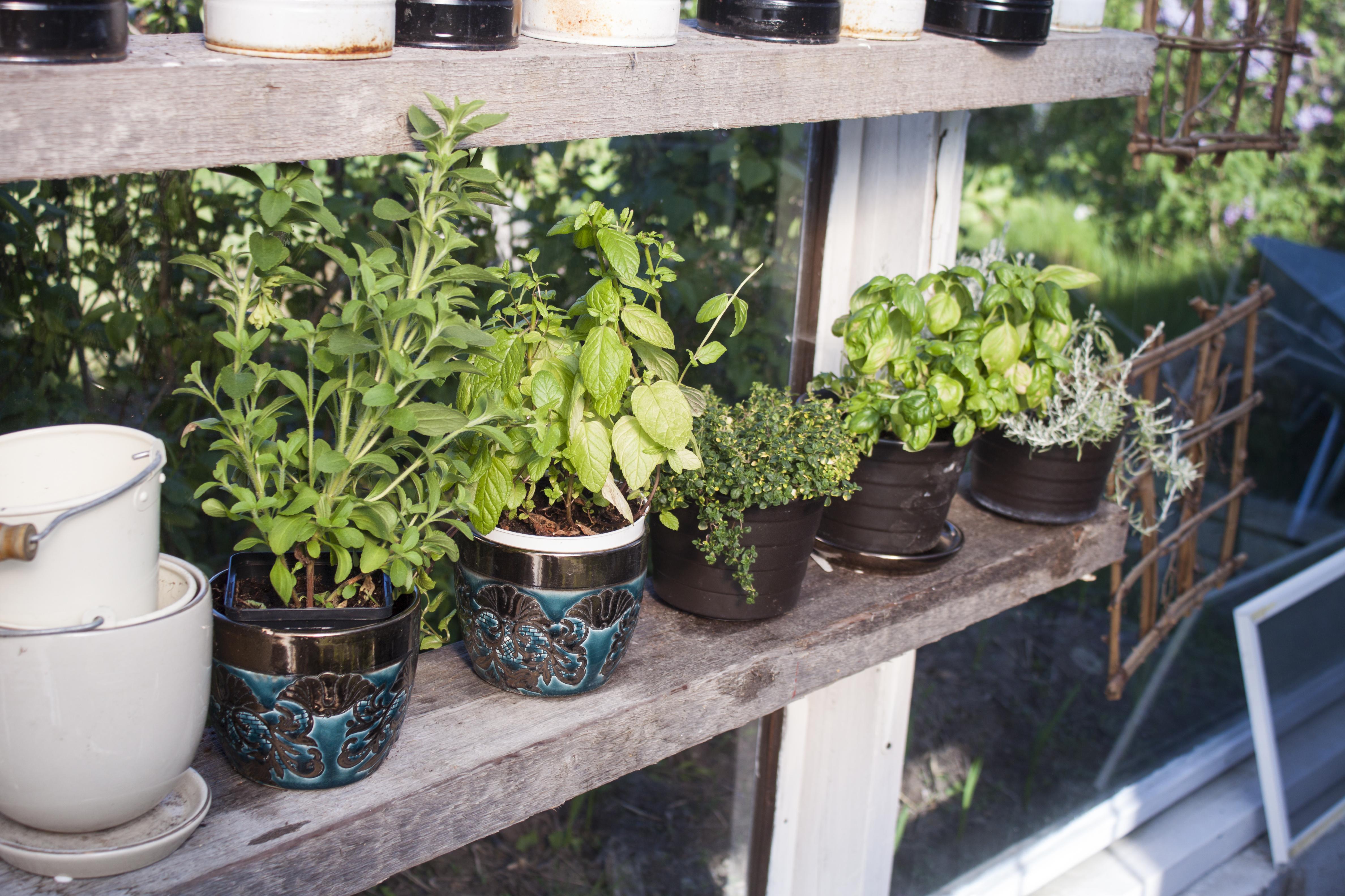 Creating An Indoor Apartment Garden