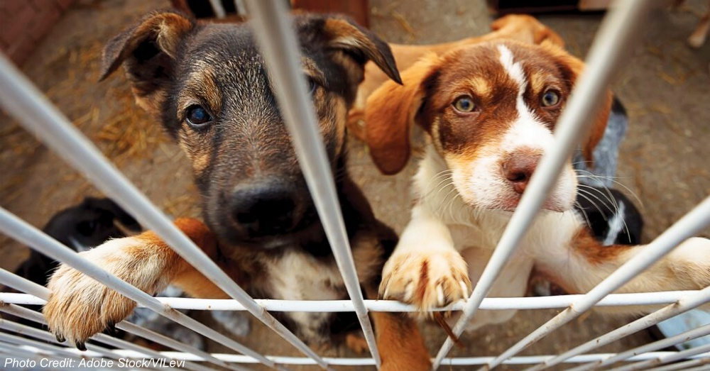 dogs-ASPCAFree-Event
