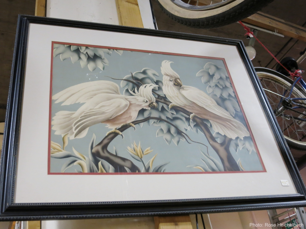 Turner Cockatiel Print