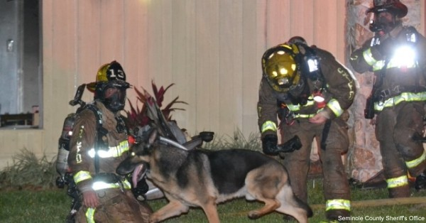 Maxx led firefighters into her burning Longwood, Fla. home to save a 2-year-old girl and 4-year-old boy.