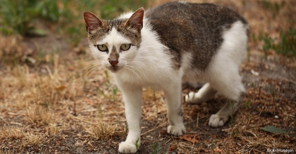 Chernobyl is now home to many species of mammals, and boasts a considerable cat population.
