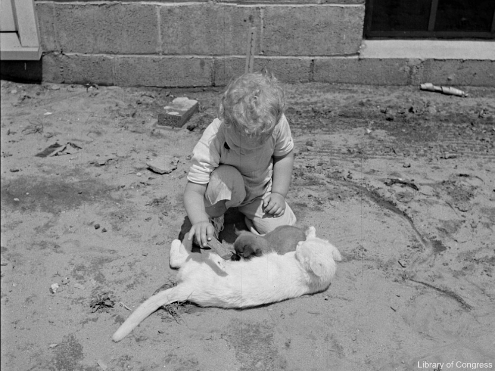 Child Playing with a Cat