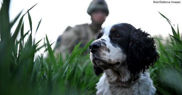Pet-PTSD flickr:Defence Images