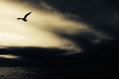 seagull-768785_960_720