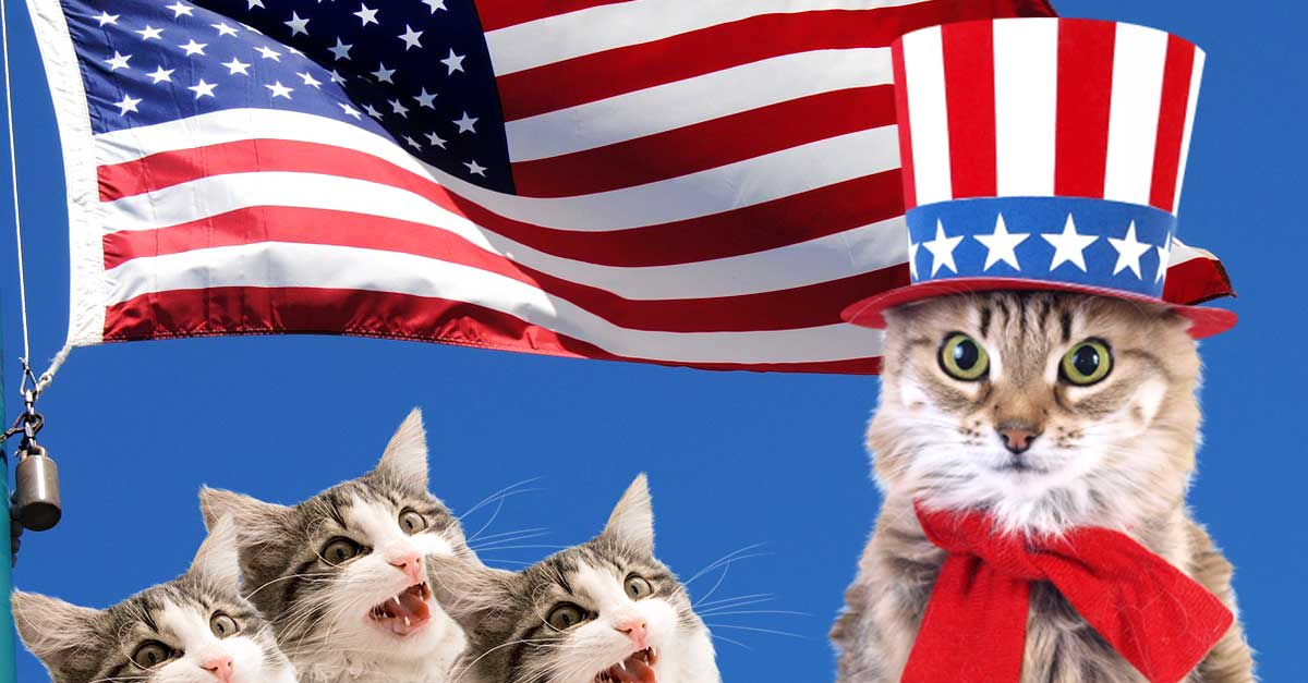 The Most Patriotic Cat You'll Ever Find! Watch As He Meows Our National Anthem