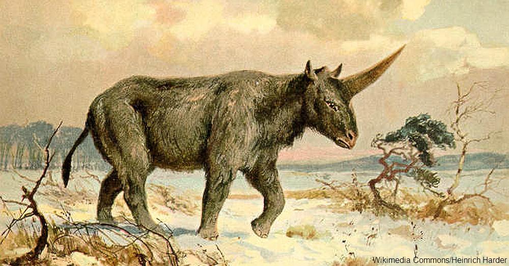 Painting of Elasmotherium