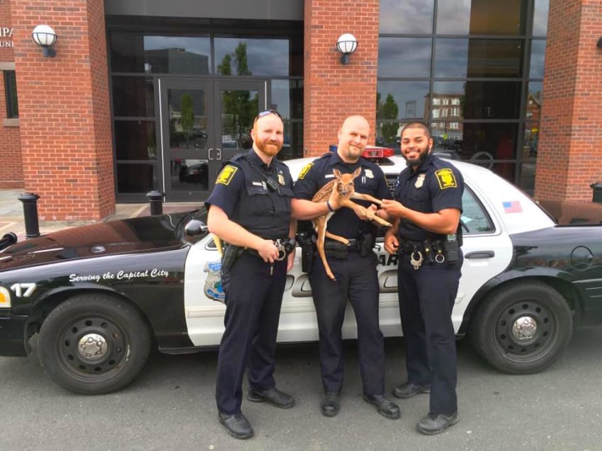 Hartford-Police-Deer-Rescue_c-850x637