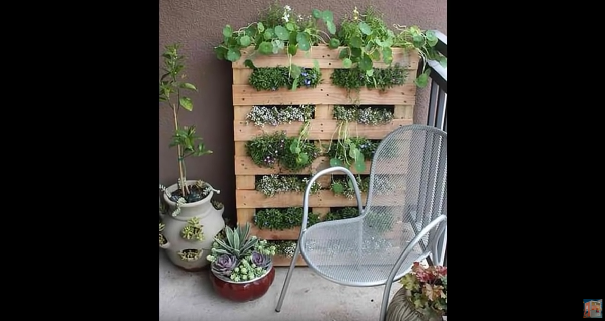 ideas-for-city-gardening-2