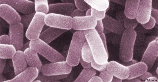 gut-bacteria1 flickr - AJ Cann