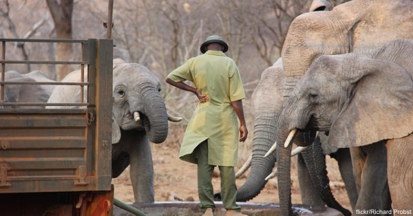 These young elephants were made orphans by poachers and the ivory trade.