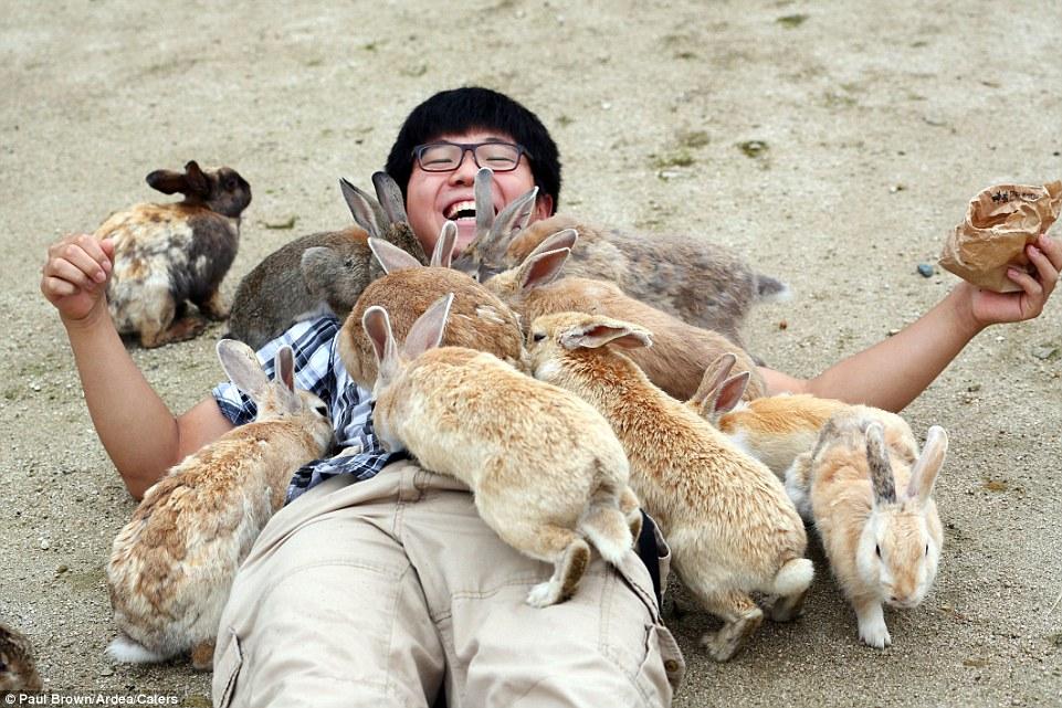 rabbit islandd