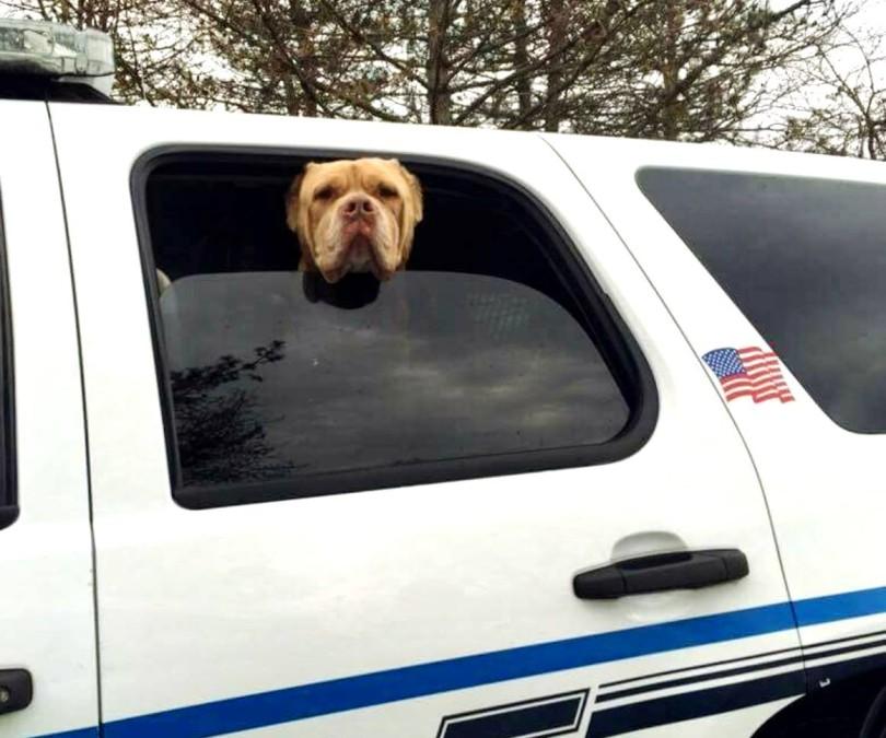 stray police dog 2