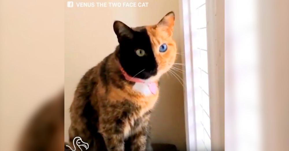 cat nail scratch disease