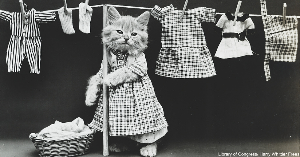 Cat Wearing clothing
