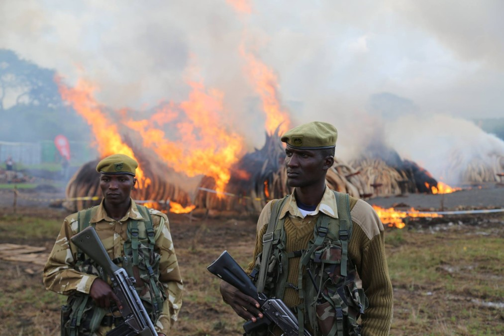 KWS Rangers stand guard over the burning ivory, as they guard the elephants. The David Sheldrick Wildlife Trust.