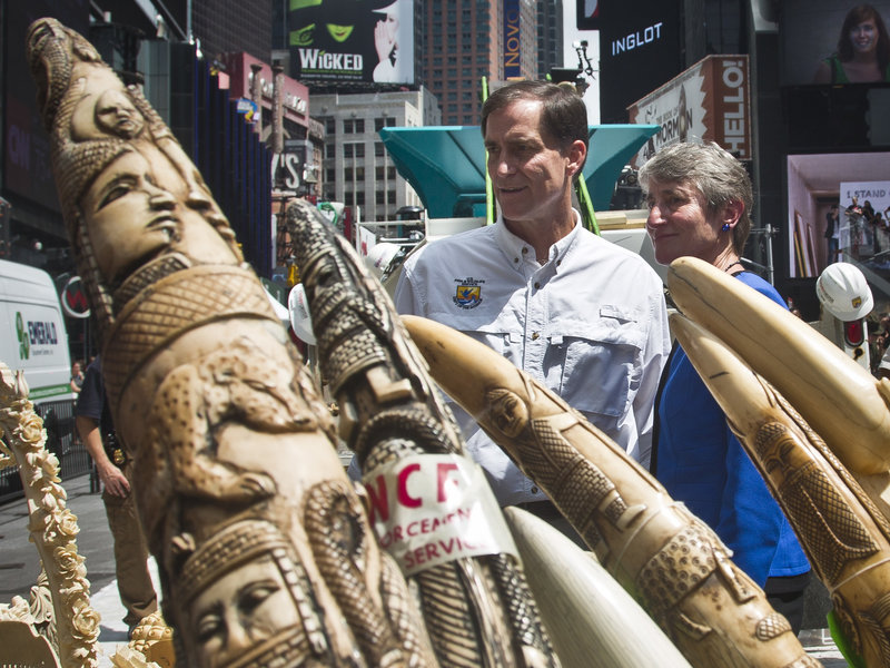 Fish and Wildlife Director Dan Ashe (left) and Secretary of the Interior Sally Jewell select confiscated illegal ivory to crush in an effort to halt elephant poaching and ivory trafficking in New York City's Times Square in June 2015. Bebeto Matthews/AP