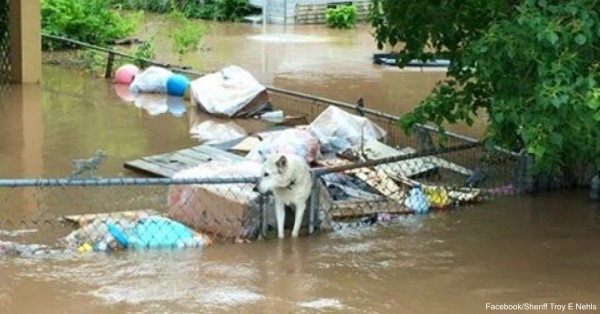 flood-dog3 Facebook:Sheriff Troy E. Nehls