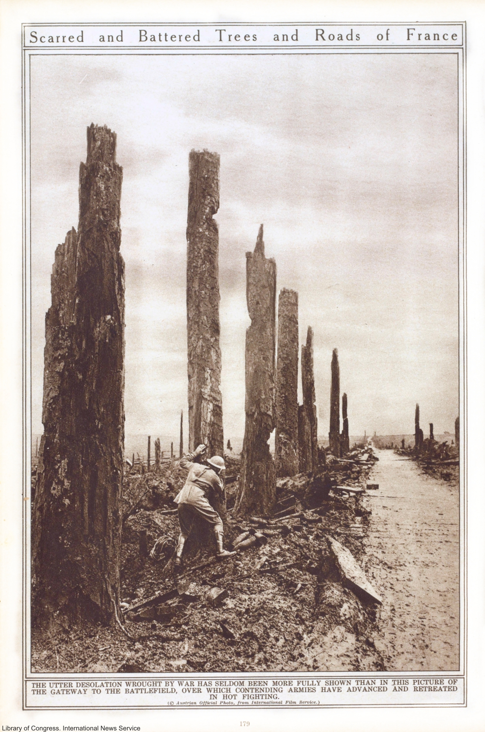 Damage to trees in France after WWI