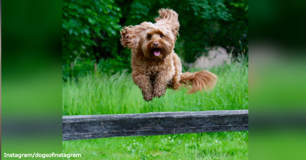 canine-benefits5