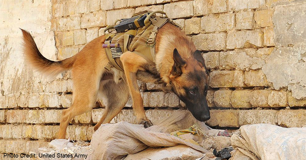 militarydog_funeral1