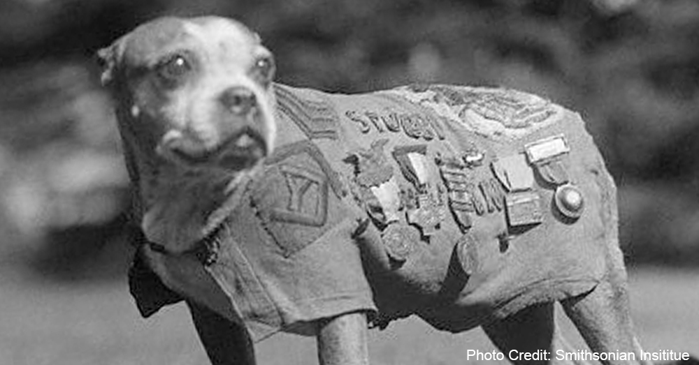 military-dogs6