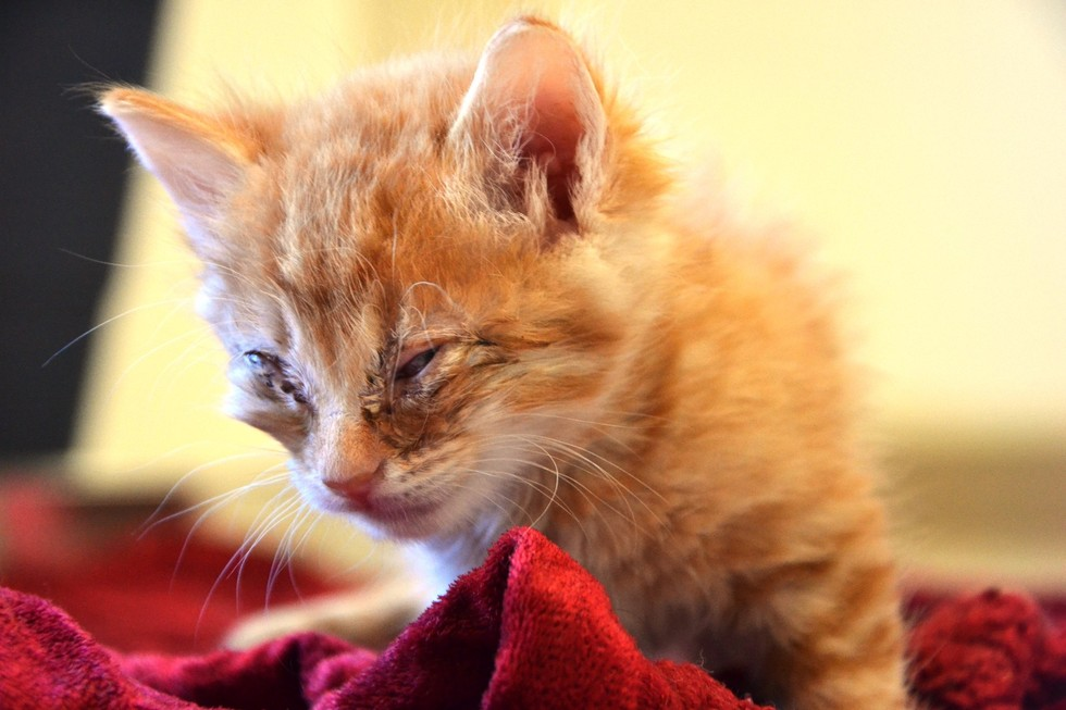 How to Care for Orphaned Kittens Above 3 Weeks of Age