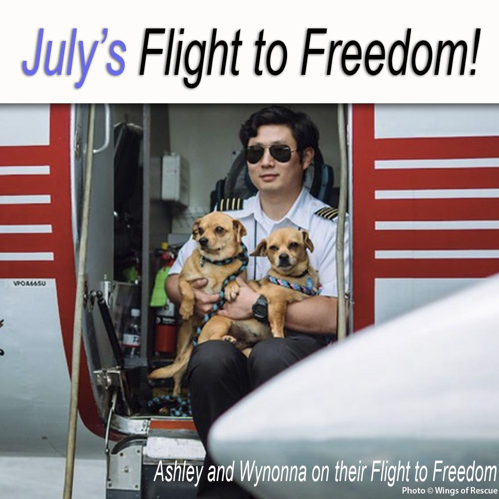 Fly Animals to Freedom
