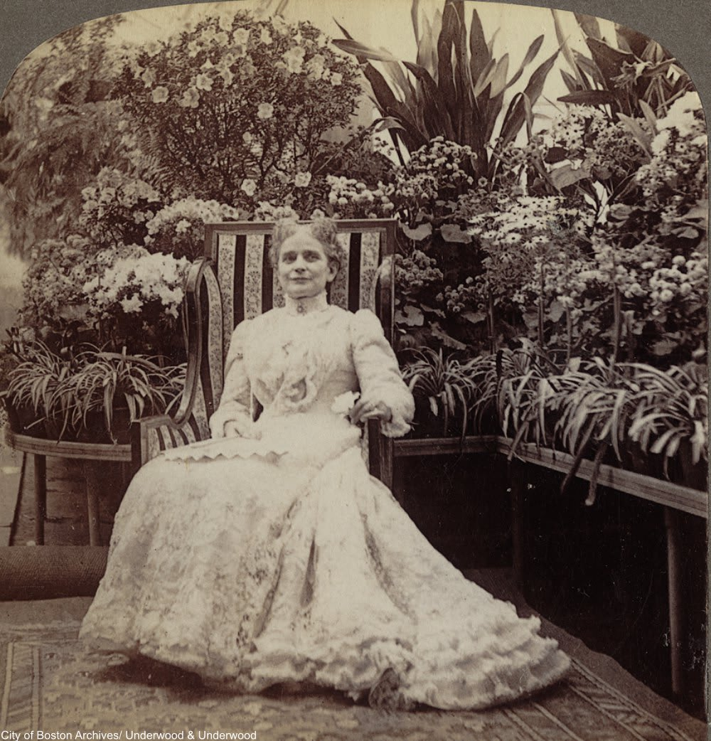 The Plant Fever That Swept Through Victorian England Dusty Old Thing