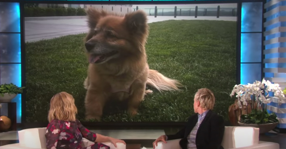 Kristen Bell shared a story about Lola on Ellen.
