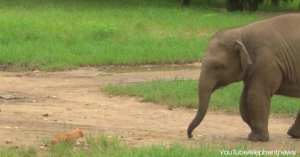elephant-cat