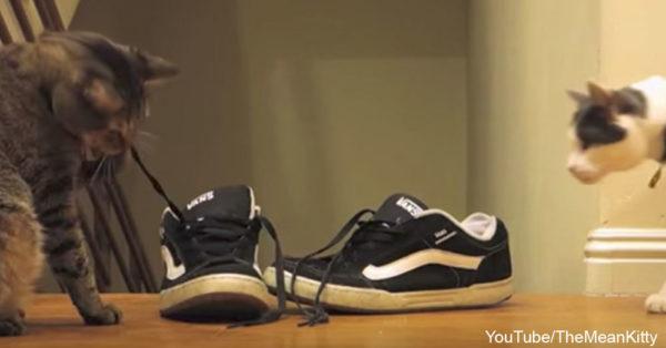 shoelacekittens0