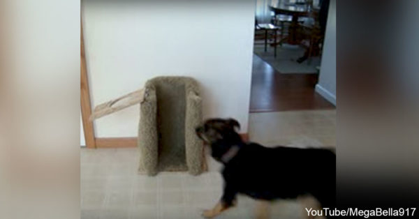 dogchair1