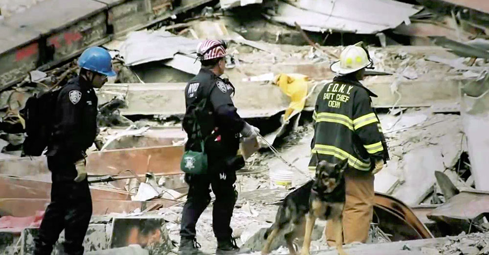 Source: YouTube/Dog Files Not all thge heroes of 9/11 wore uniforms. Some of them wore collars.