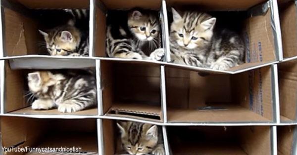catbox1