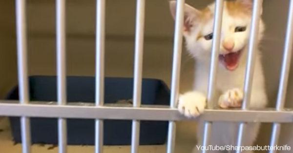 kittie-meow0