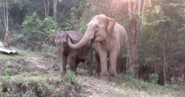 Source: YouTube/elephantnews