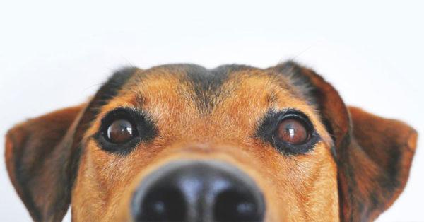 dog-bee