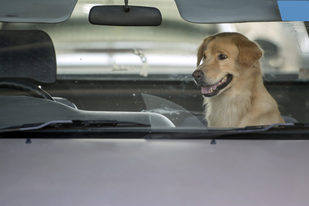 5 Reasons To Leave Your Dog In Your Car The Animal Rescue Site Blog