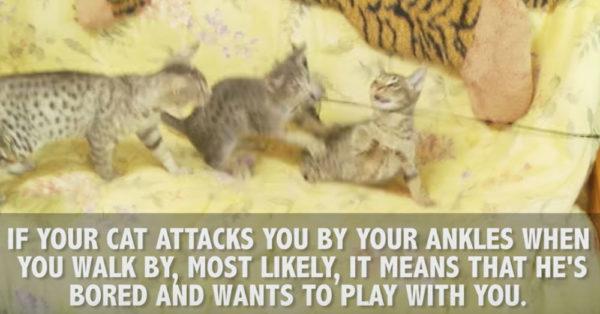cat-signs